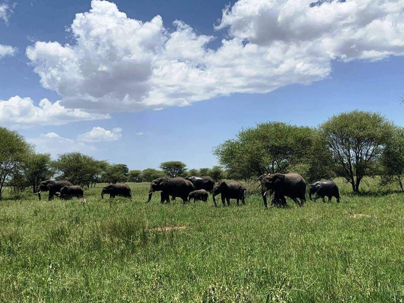 Африканське сафарі на слонів