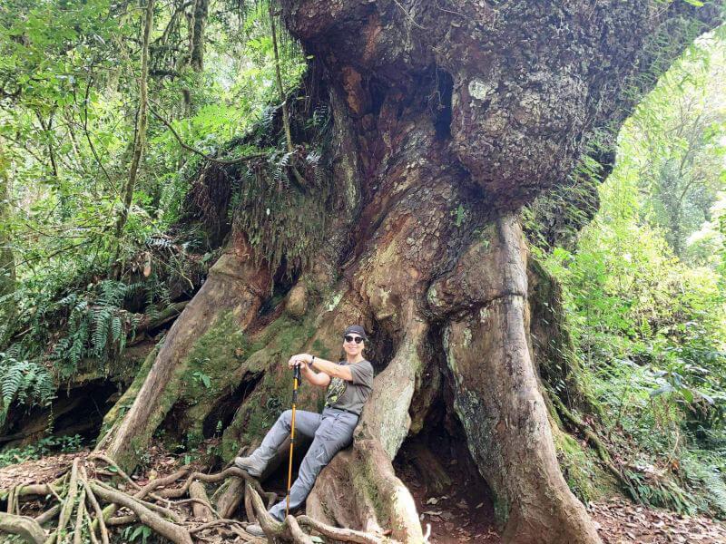 Велетенські африканські дерева