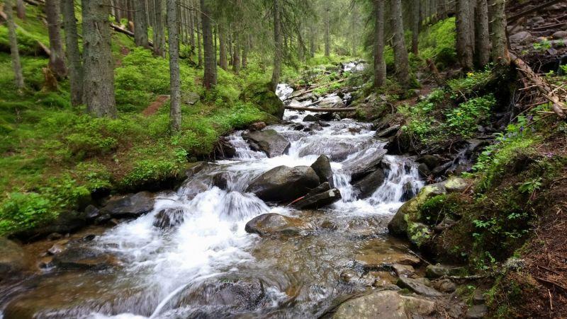 Еловый лес и река Прут возле Заросляка