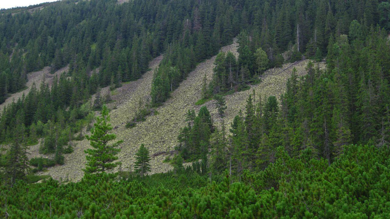 Горганский лес