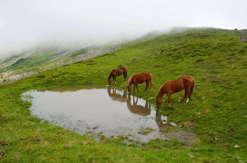 Коні біля озера