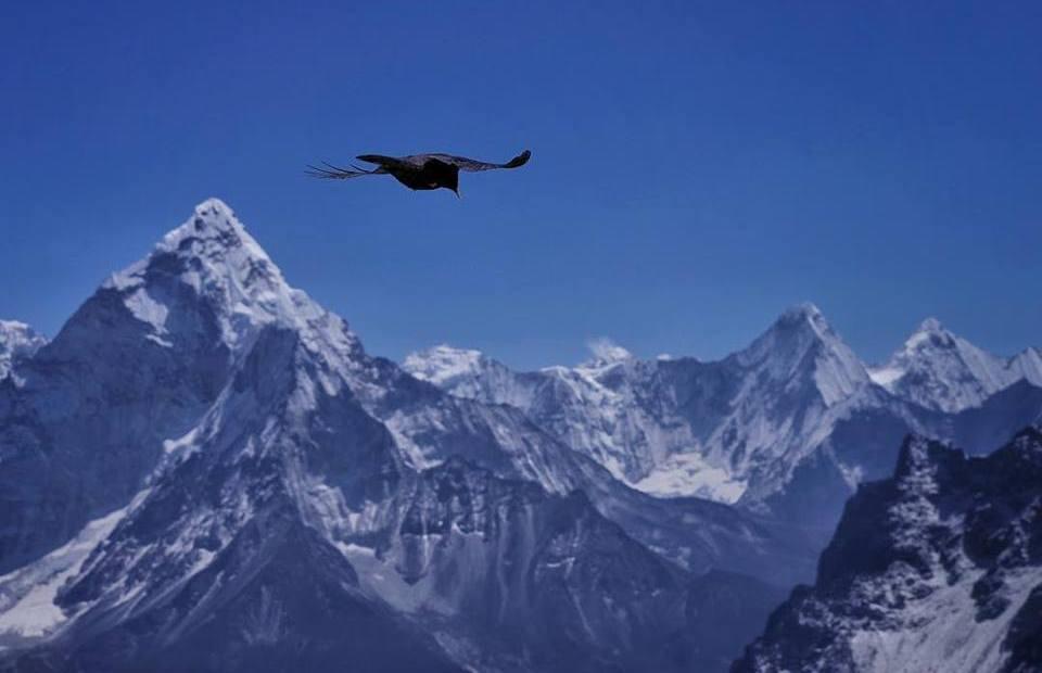Птица над Гималаями