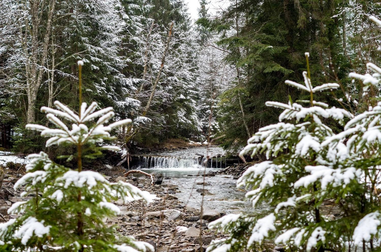 Поход на Говерлу - зимний лес
