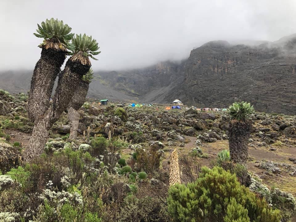 Флора Килиманджаро