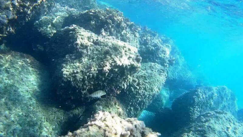 Подводный мир Кипра
