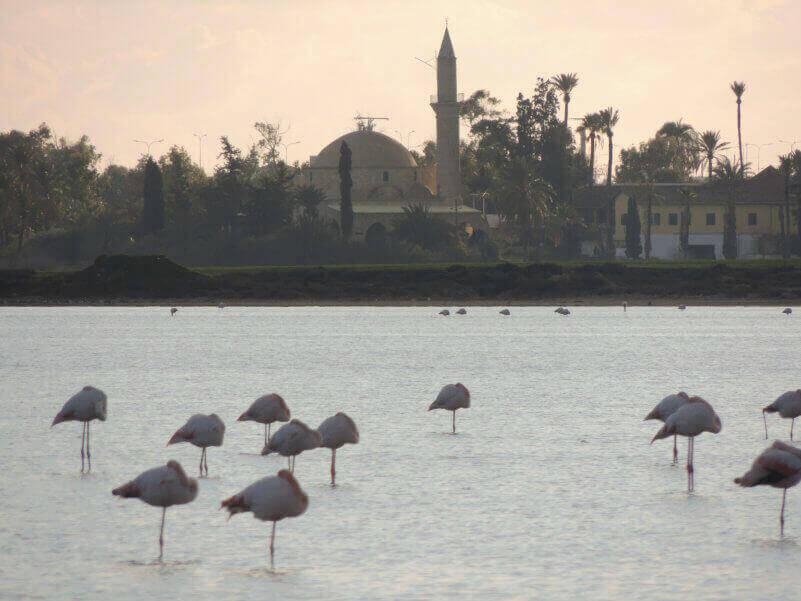 розовые фламинго на Кипре