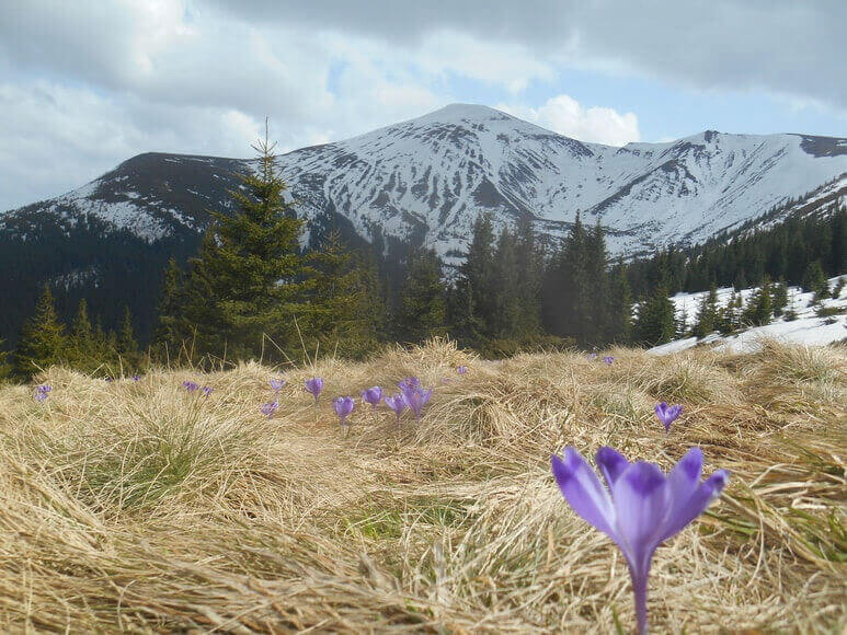 Тур на Говерлу - цветы