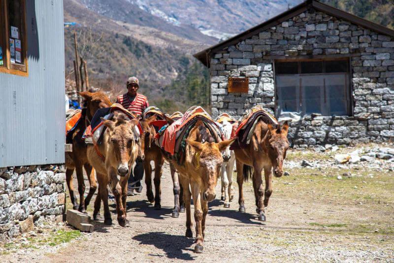 Груженные мулы