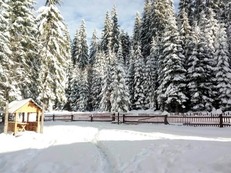 в Козмещике зимой