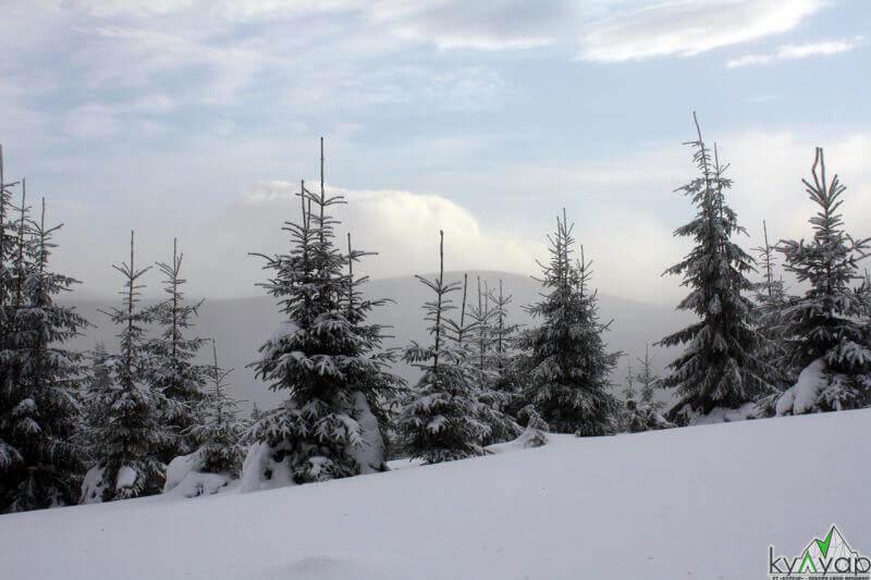зимові пейзажі Карпат