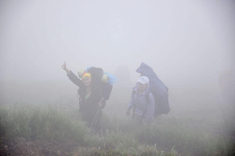 Їжачки в тумані