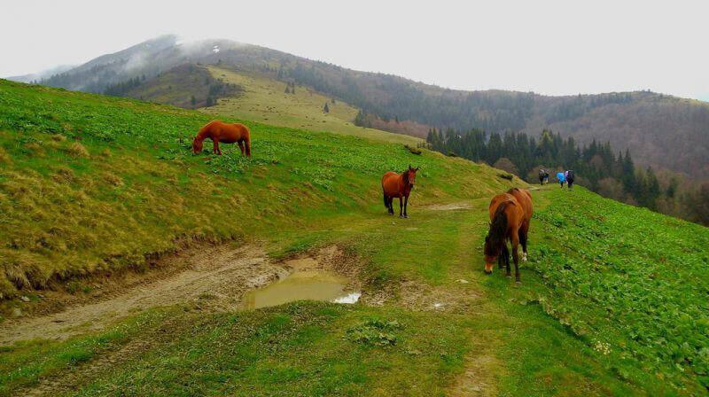 Карпатські конячки