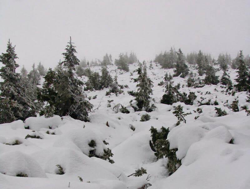 Ближе к вершине деревья все ниже