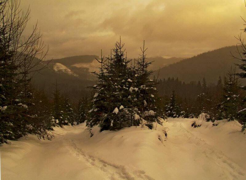 Карпаты в снежной мгле