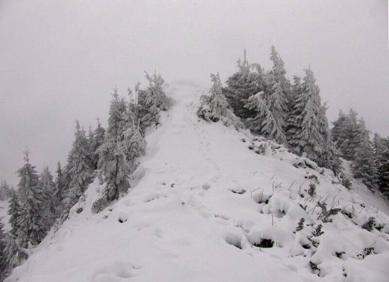 Следы, которые через 5 мин заметет снегом
