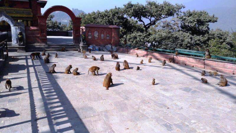 Дворец обезьян