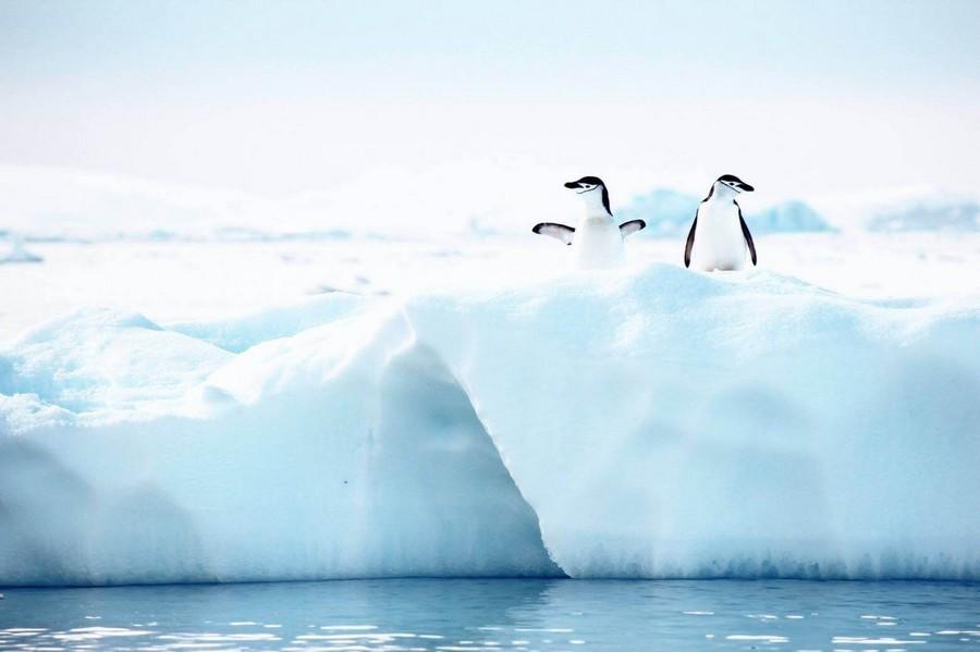 Экспедиция в Антарктиду