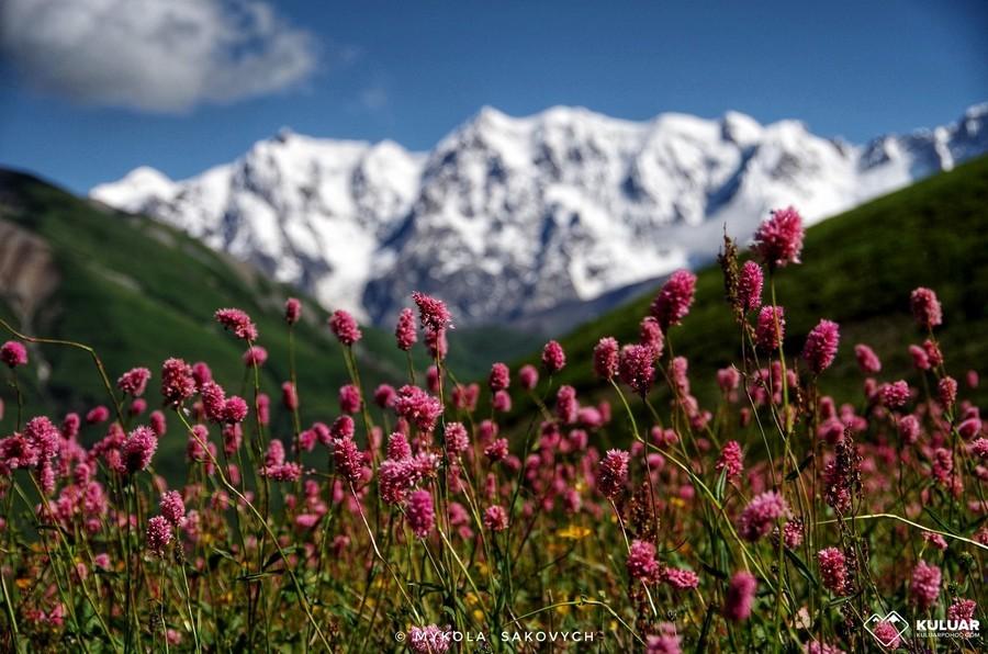Горные цветы в Грузии