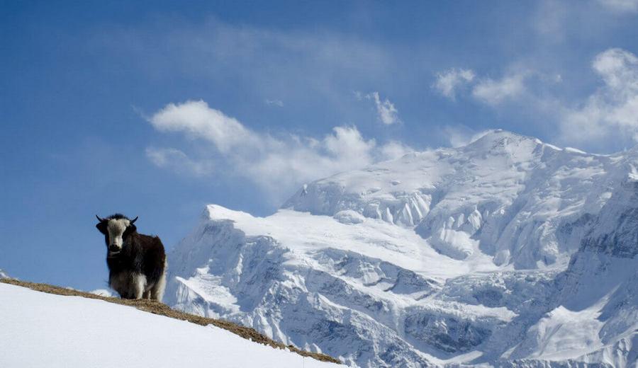 Як в Гималаях