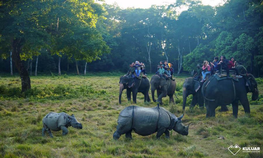 Сафари в Читване