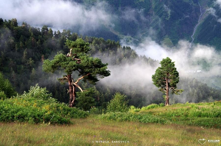 Лес и облака