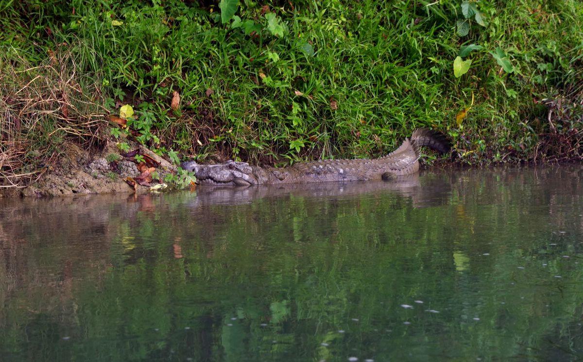 Национальный парк Читван - фото 5