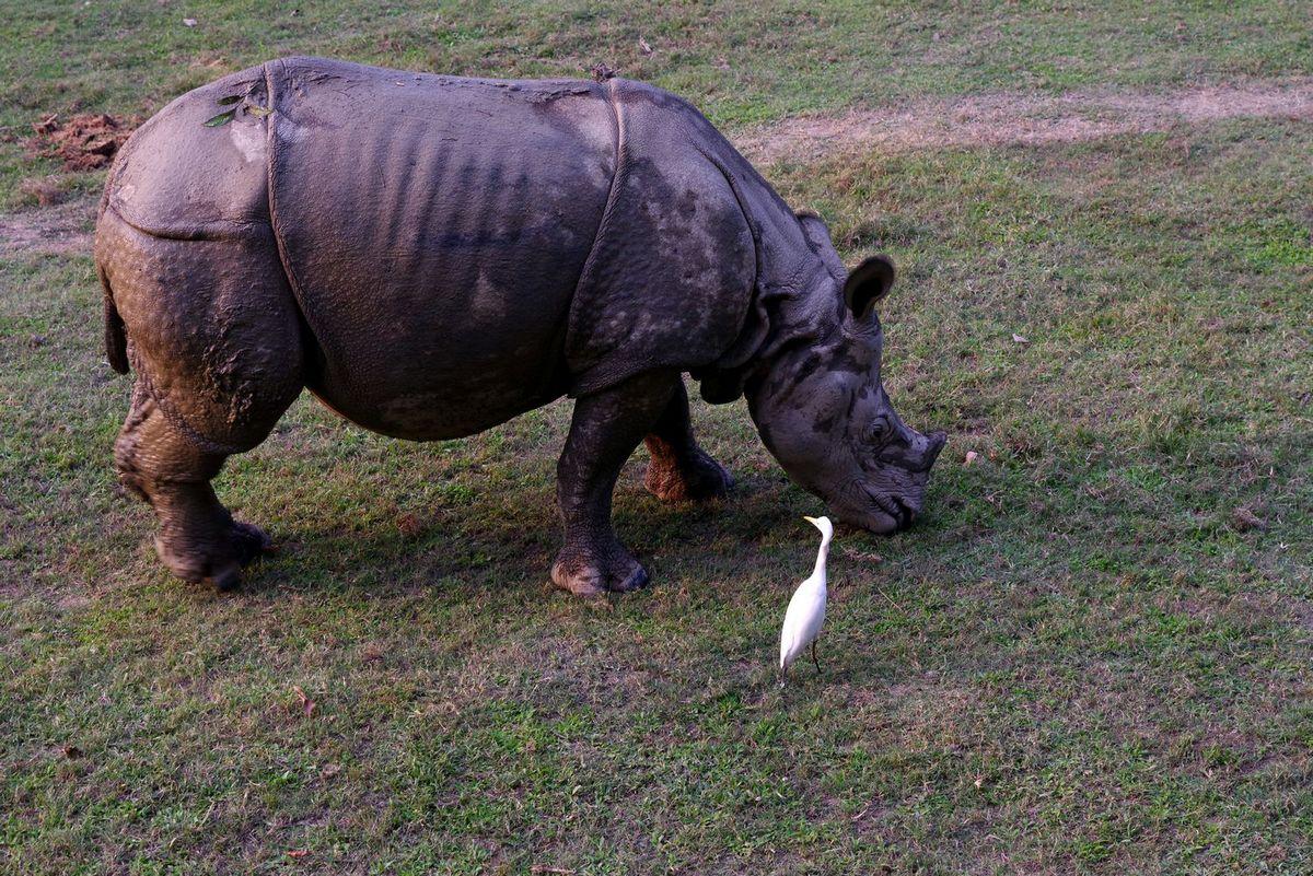 Национальный парк Читван - фото 9